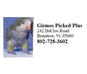 Gizmos Pickled Plus
